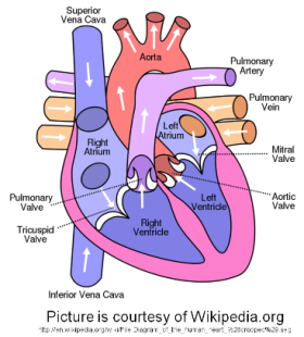 Heart diseases lolla and lilly dog heart diagram ccuart Image collections